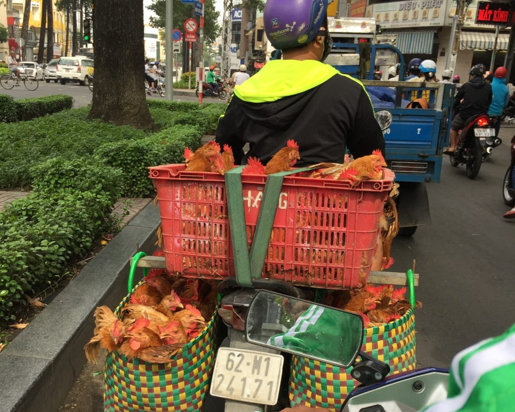 motorbike carrying chickens